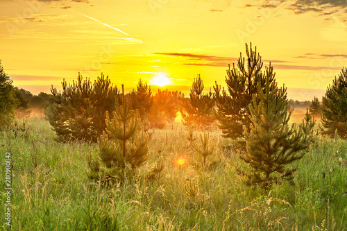 Foto op Aluminium Geel spring landscape with forest and meadow at sunrise