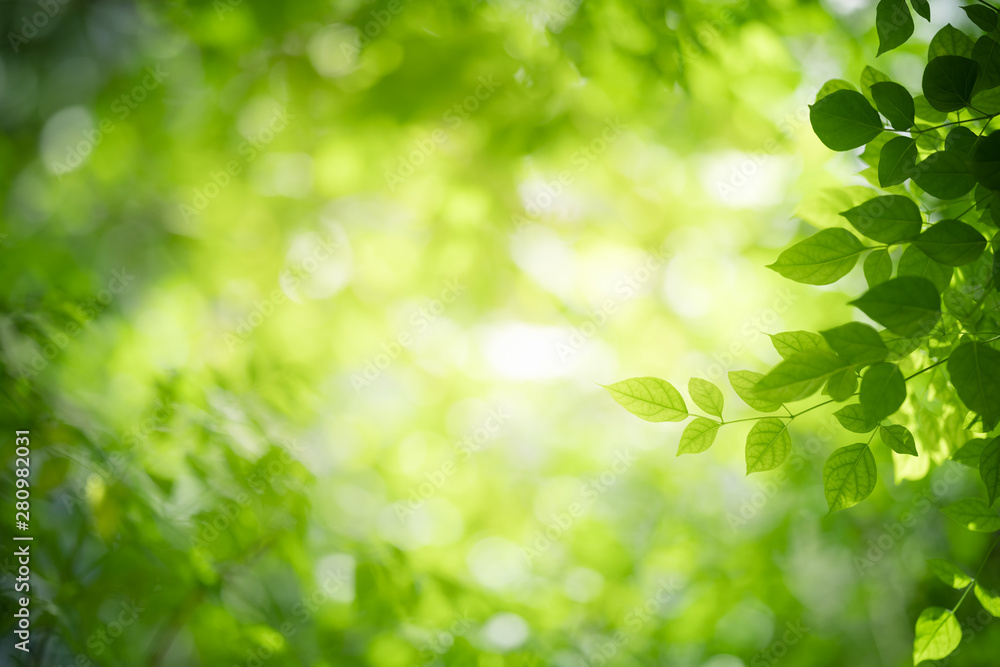 Fototapety, obrazy: Closeup nature view of green leaf on blurred greenery background in garden with copy space using as background natural green plants landscape, ecology, fresh wallpaper concept.