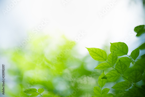 fototapeta na ścianę Closeup nature view of green leaf on blurred greenery background in garden with copy space using as background natural green plants landscape, ecology, fresh wallpaper concept.