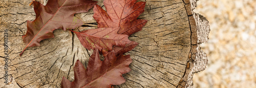 Tree stump covered in moss and leaves Canvas Print