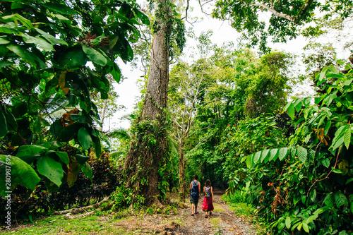 Fotografie, Tablou  thick jungle of Corcovado National Park, Costa Rica