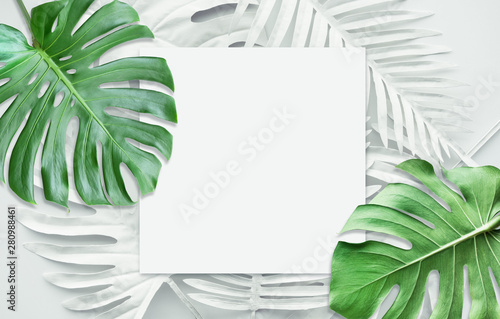 Fotografía Collection of tropical leaves,foliage plant in white color