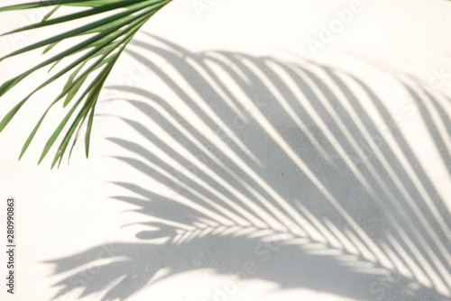 Montage in der Fensternische Palms abstract background texture of shadows palm leaves on a concrete wall