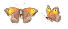 Set - Two Beautiful Butterflie...