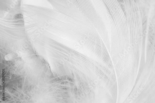 Poster de jardin Oiseau Beautiful white feather pattern texture background