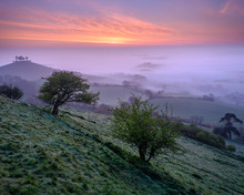 Misty Dawn Twilight Over The Distinctive Pine Topped Colmer's Hill Near Bridport, Dorset
