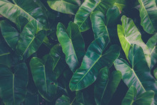 Green Plants Or Green Leaves In The Tropics As The Background