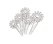 Anemone Sketch Collection Vector Illustration