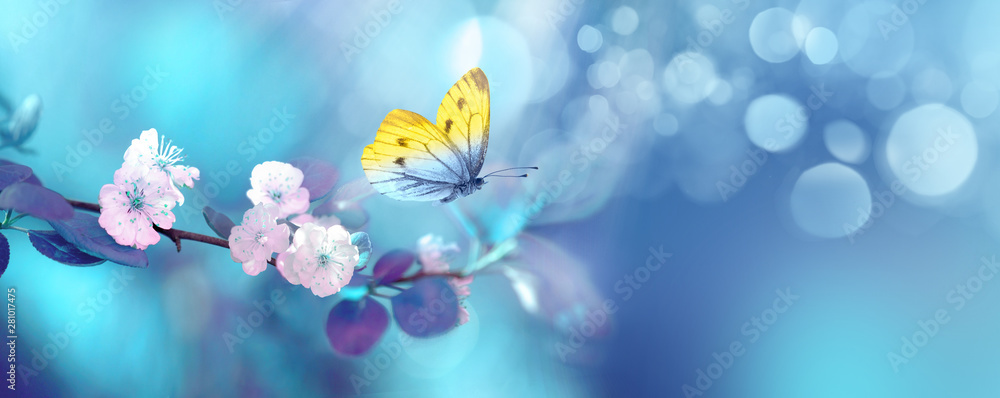 Fototapety, obrazy: Beautiful blue yellow butterfly in flight and branch of flowering apricot tree in spring at Sunrise on light blue and violet background macro. Elegant artistic image nature. Banner format, copy space.