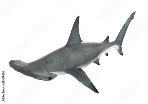 Obraz Hammerhead Shark Isolated - fototapety do salonu