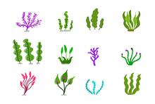 Aquarium Ocean Corals