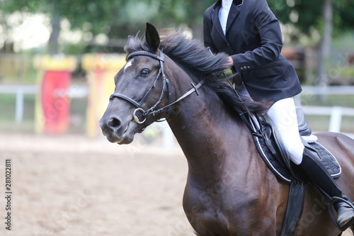 Fototapety, obrazy: Beautiful young sport horse canter during training outdoors