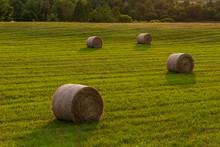 Round Hay Bales In Fields