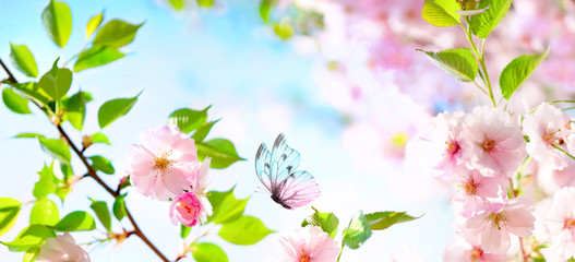 Panel Szklany Drzewa Beautiful butterfly and cherry blossom branch in spring on blue sky background with copy space, soft focus. Amazing elegant artistic image of spring nature, frame of pink Sakura flowers and butterfly.