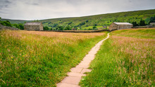 Footpath Through Muker Hay Meadows, In Swaledale One Of The Most Northerly Dales In The Yorkshire Dales National Park, Famous For Its Wildflower Meadows And Field Barns