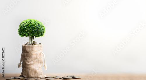 Fotomural  Coins in sack and small plant tree