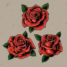 Vintage Red Blooming Roses Concept