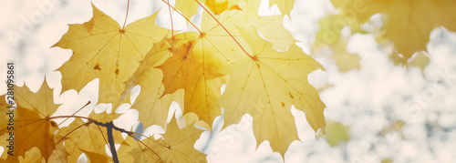 Foto auf Leinwand Honig Autumn floral image. Yellow foliage of maple in the sunlight. Autumnal branches in nature.
