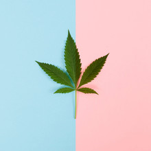 Cannabis Leaf On Pink And Blue
