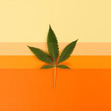 Cannabis Leaf On Yellow To Orange