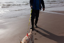 Man Walking Dog On The Beach With Paw Prints In The Sand