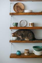 Cat Smelling Pottery On Shelf