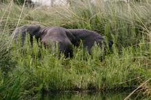 Elephant Hiding Behind Plants