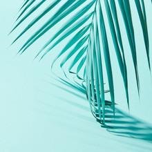 Close-up Of A Palm Leaf Presented On A Blue Background With Shad