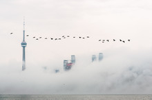 Toronto Downtown And CN Tower Rising From The Fog