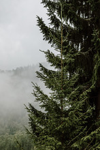 Misty Morning In The Forest .