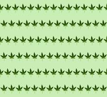 Cannabis Leaf Pattern On Green