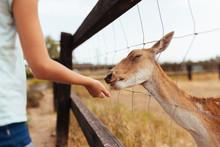 Girl Feeding Bread To Deer