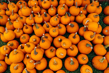 Small Pumpkins For Halloween Piled Up