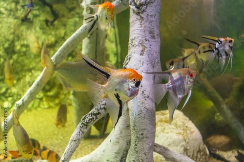 Photo Small fish in deep water in aquarium, Barcelona, Spain