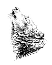 The Wolf Howls.Sketchy, Graphi...