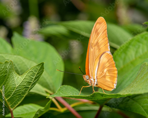 Closeup of a butterfly in the garden