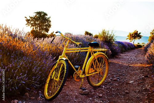 Garden Poster Bicycle yellow bicycle in the lavender fields