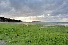 Les Algues Vertes Qui Polluent La Mer Dans Les Côtes D'Armor