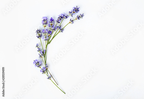 Wallpaper Mural Beautiful lavender flowers on white background