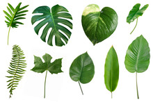 Set Of Tropical Green Leaves I...