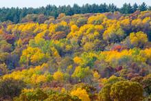 Vivid Jewel Color Leaves Turni...