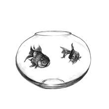 Illustration Of Drawing Goldfish In A Salt Bottle