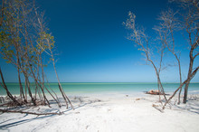 Trees On The Beach - Fort Deso...