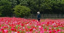 Woman Look Away Inside Poppy Flower Field