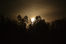 The Moon Rises After The Trees