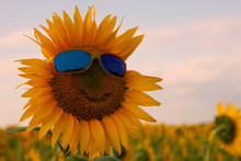Orange Sunflower With A Smile ...