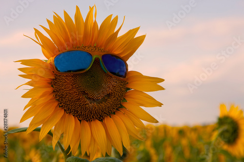 In de dag Zonnebloem Orange sunflower with a smile in yellow sunglasses with blue glasses in a field of sunflowers