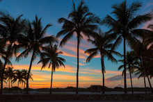 Palm Trees On Miami Beach At S...