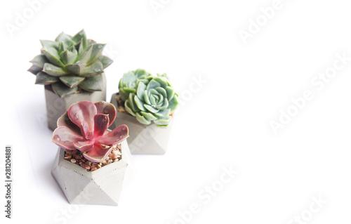 Cadres-photo bureau Fleur collection of multicolored succulents in concrete pots. Echeveria different flowers. isolated succulent flower in white background. cement original pot with house plant.