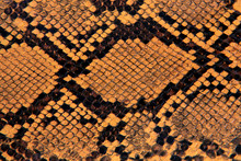 Natural Yellow Snake Leather B...